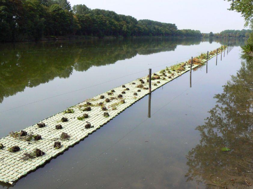 Drijvende plantenmatten in de Majoorgracht en Zillebekevijver