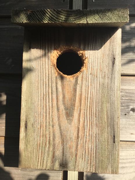 Outside the birdbox