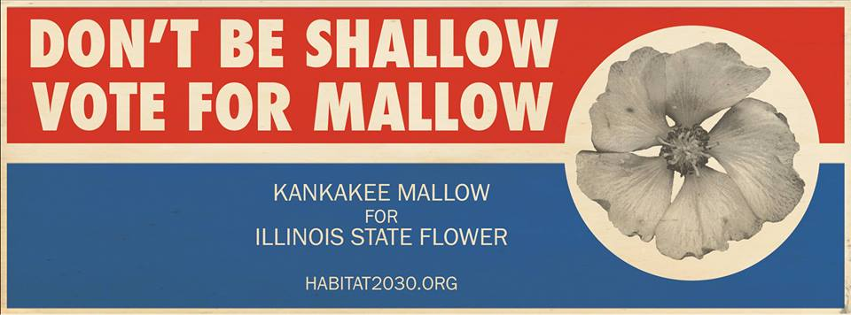 The Kankakee Mallow—Favored to become Illinois' new state flower?