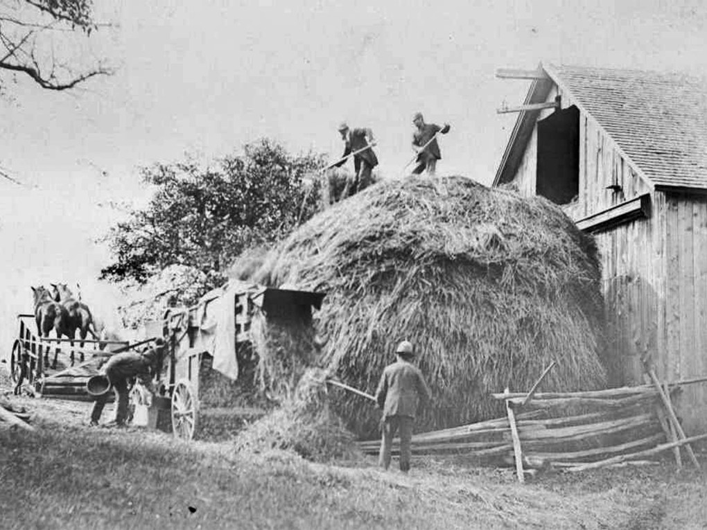 Putting up the loose hay for winter, year unknown; photo courtesy Williamstown Historical Museum. Hay Day celebrates the town's agricultural heritage.