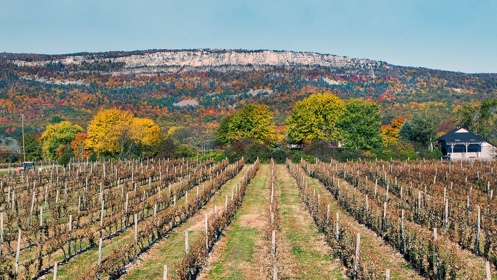 A photo of White Cliff Vineyard and Winery by photo by Tom Ligamari. Perhaps three miles in the distance, a ridge of white cliffs rise several hundred feet over an autumn landscape.