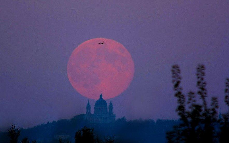 """Harvest Moon,"" by Stefano De Rosa"