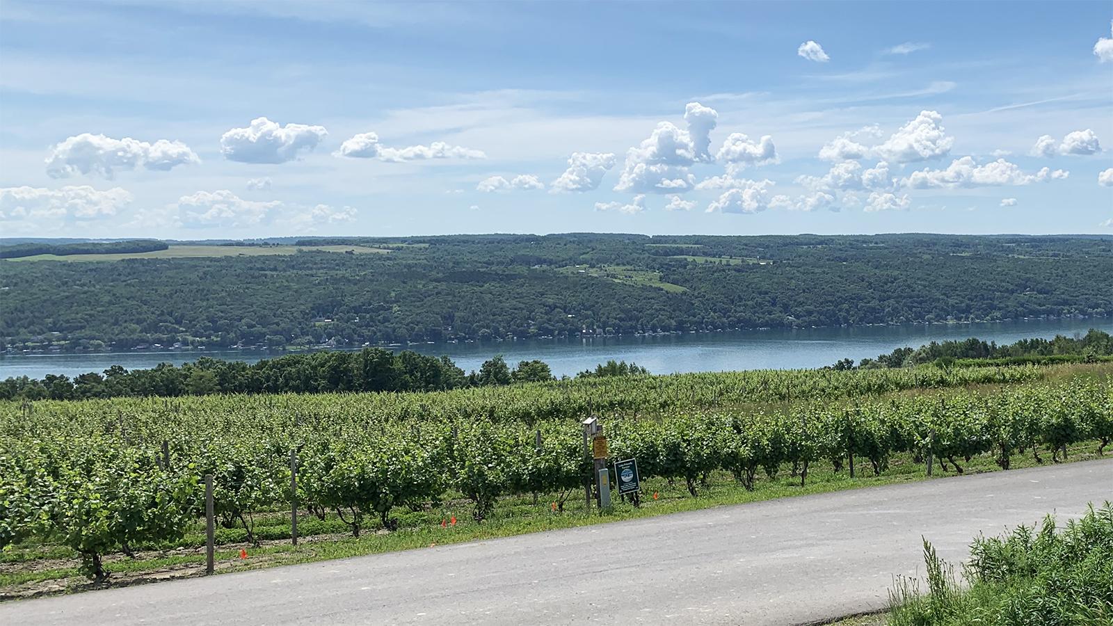 "Dr. Konstantin Frank vineyards overlooking Keuka Lake. Frank ignited the ""Vinifera Revolution"" in the FLX; photo by Nancy Koziol."