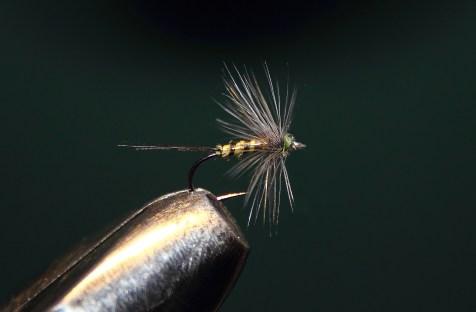 Blue-winged Olive