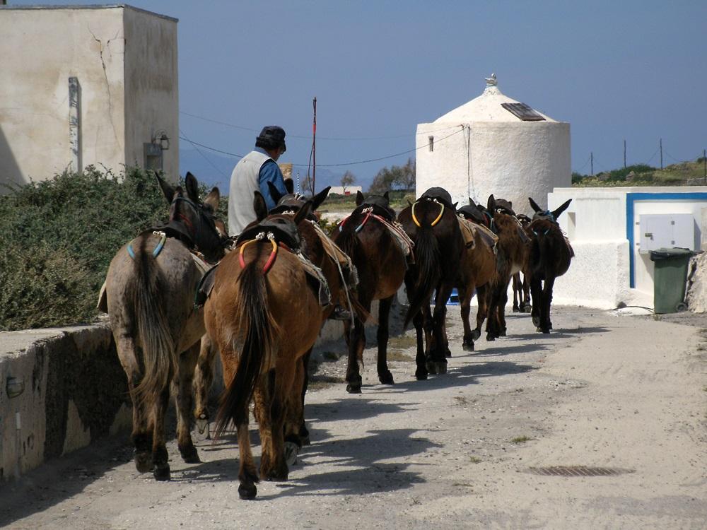 81 Korfos