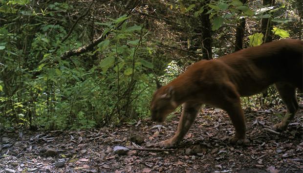 La fauna natural del bosque será una de las principales afectadas con los proyectos de CFE.