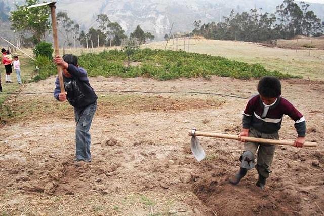 Sin pago, más de la mitad de los niños que trabaja en Puebla