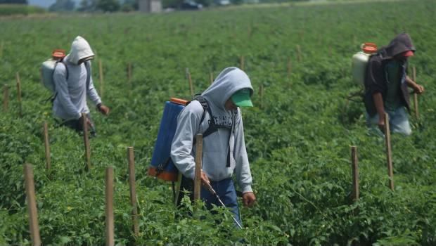 Denuncian hostigamiento contra jornaleros migrantes en Michoacán