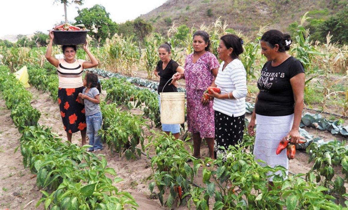 Agroquímicos, discreto daño colateral (Michoacán)