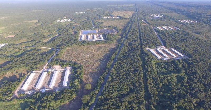 Destrucción y contaminación ambiental en Yucatán