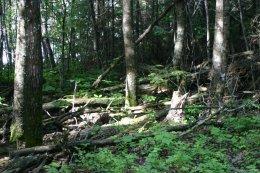 Nice walk in the woods