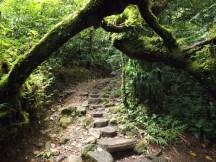 Jungle Path on Mombacho Volcano