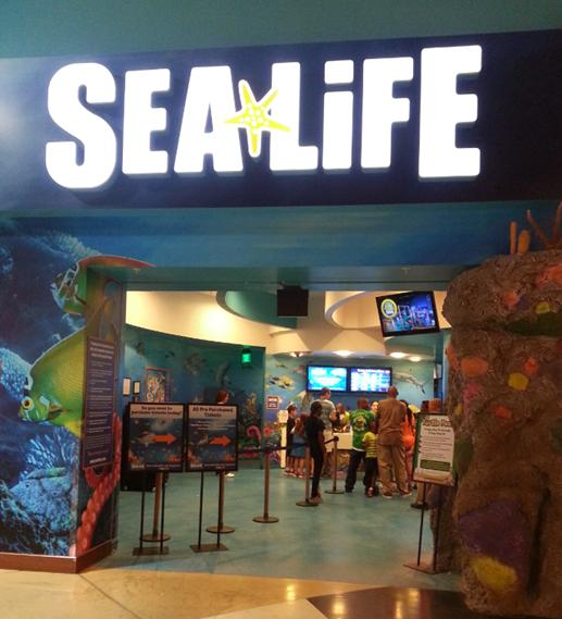 Sea Life Aquarium Shark Week