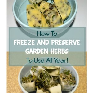 How To Freeze And Preserve Garden Herbs To Use All Year!