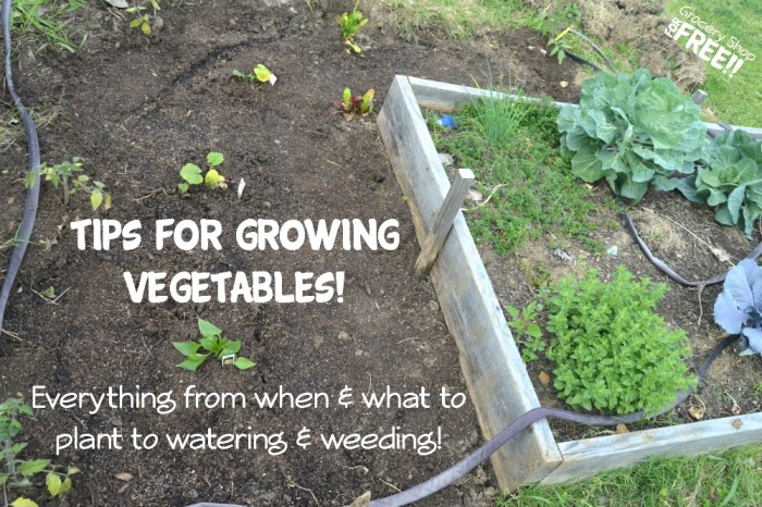 Tips For Growing Vegetables!