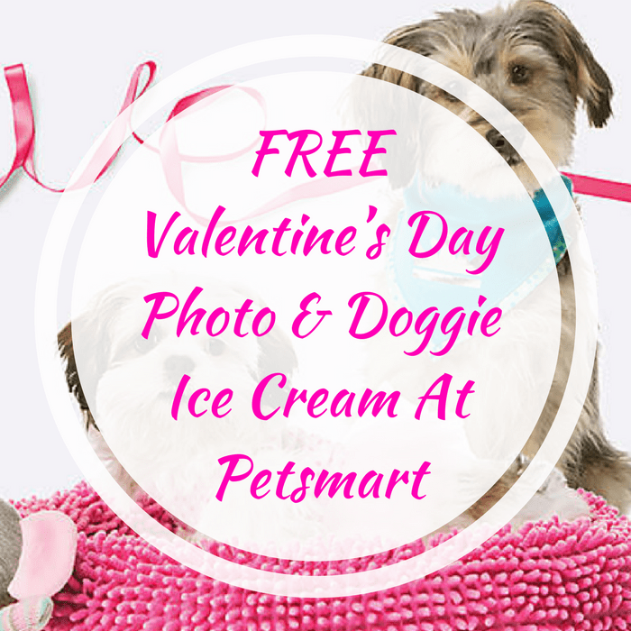 Valentine's Day Photo & Doggie Ice Cream