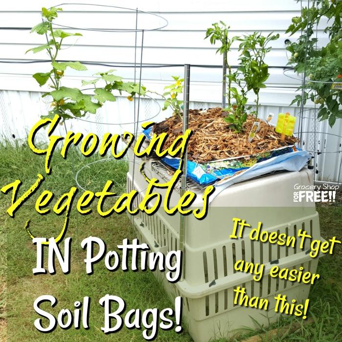 Growing Vegetables In Potting Soil Bags!