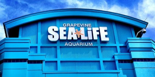 Sea Life Grapevine Aquarium New Claws Exhibit Giveaway!