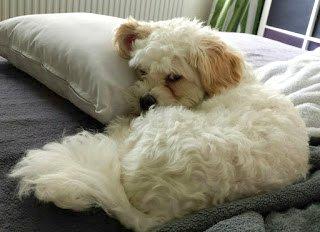 Lucky, ons hondje