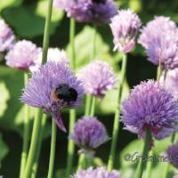 Wij kunnen de bijen helpen! Doe je mee?