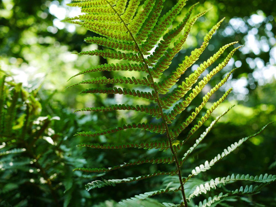 Verwonderend 9 van mijn favoriete (half)schaduwplanten – Groen met Saar KN-09