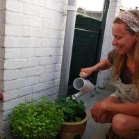 Mijn tips om droogte in je tuin tegen te gaan