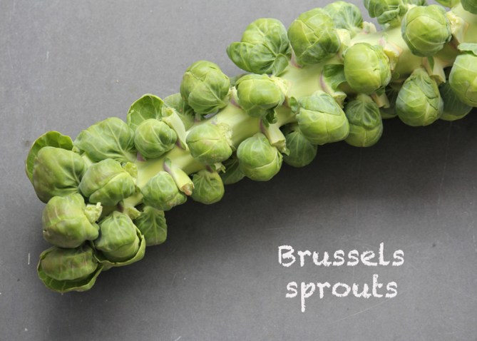 SFC_brusselssprouts_stalk_labeled