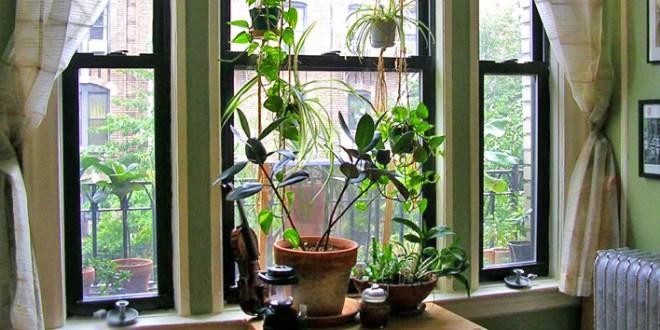 Foundations of Apartment Gardening
