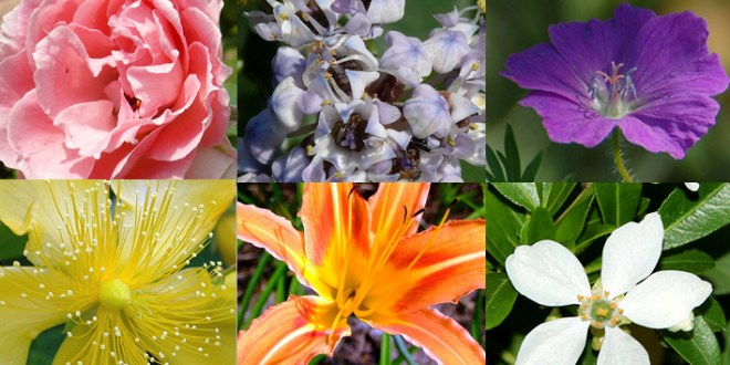 15 Plants That Don't Need Water