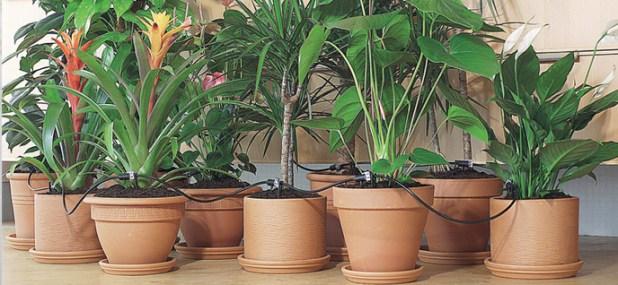 multi-pot watering system