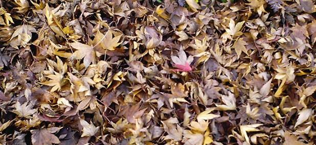 mulch leaves