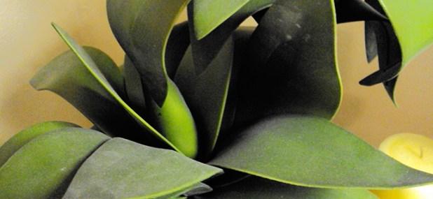 dusty indoor plants