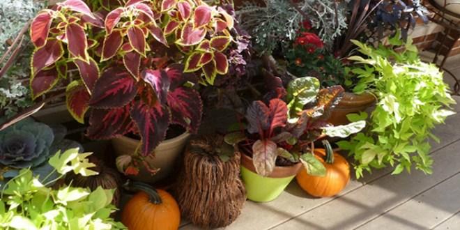 Create A Fall Balcony Garden
