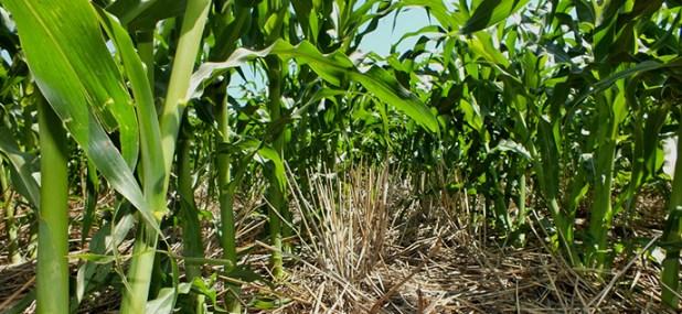 healthy vegetation