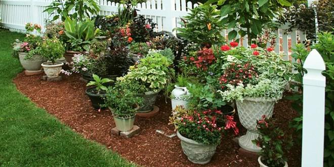 Showcase Your Plants