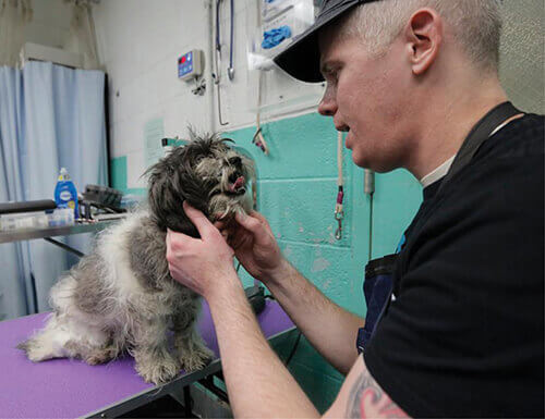 Imhof assessing a dog on grooming table