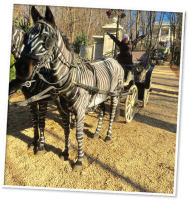horses as zebra and carrage