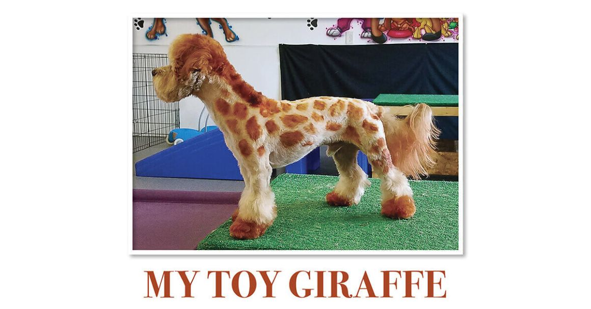 My Toy Giraffe