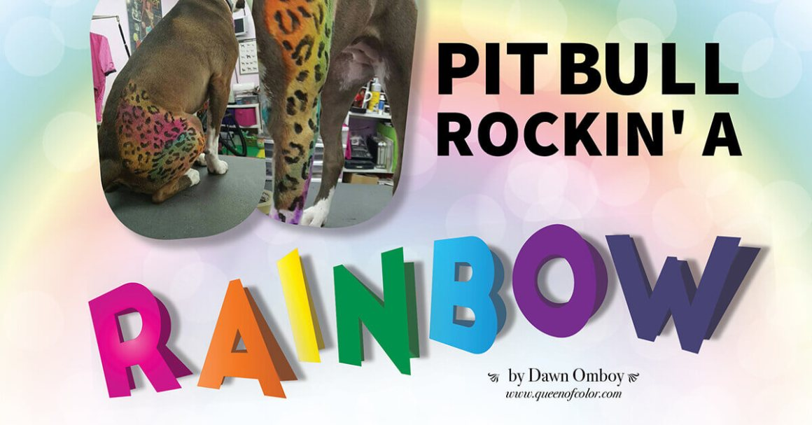 Pit Bull Rockin' A Rainbo