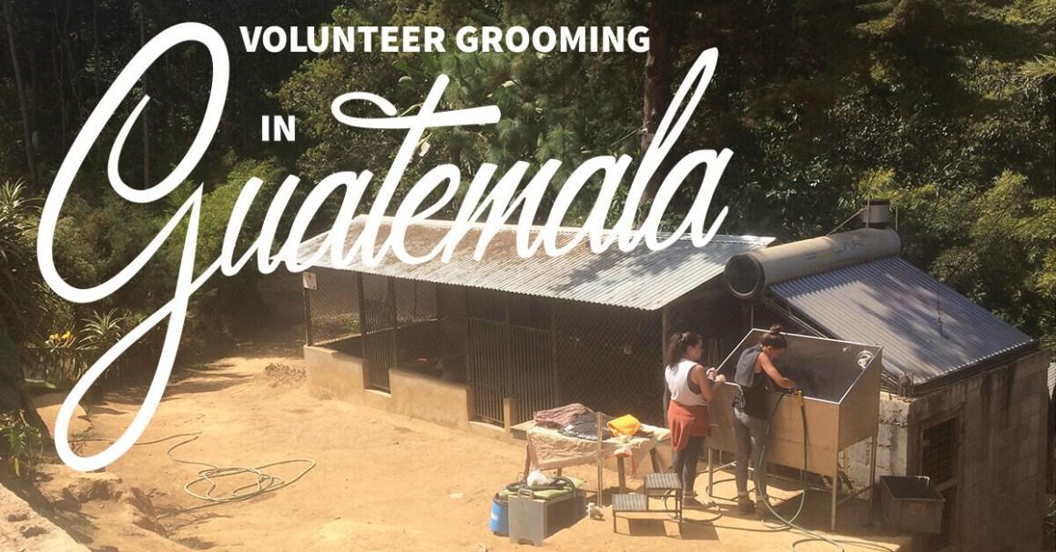 Volunteer Grooming in Guatemala