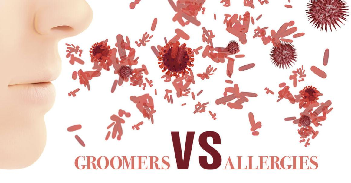 Groomers vs Allergies