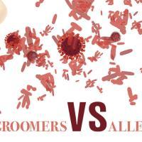 Groomers vs Allergies