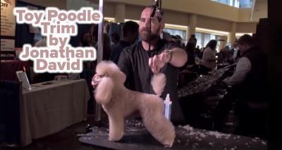 Toy Poodle Trim by Jonathan David