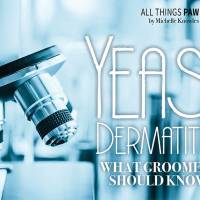 Yeast Dermatitis: What Groomers Should Know