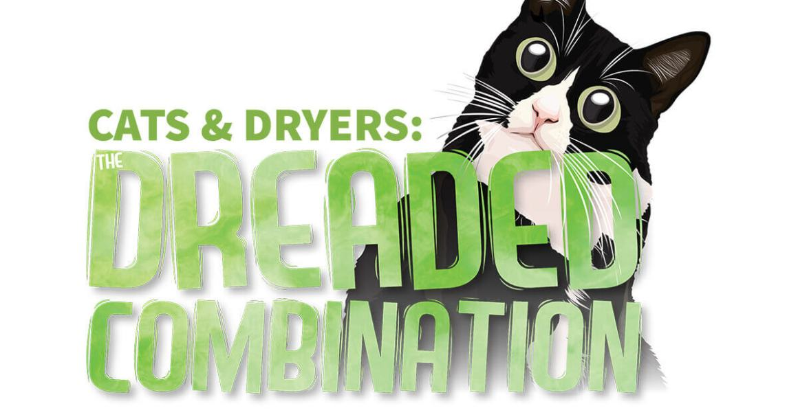 Cats & Dryers: The Dreaded Combination