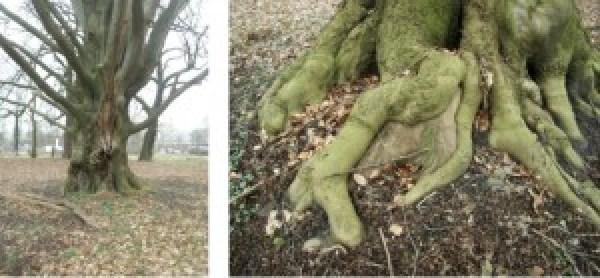 pehmöller bäume