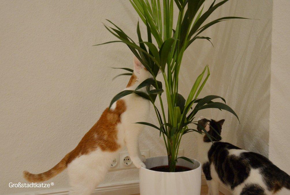 Ungiftige Zimmerpflanzen Für Katzen Ungifte Pflanzen