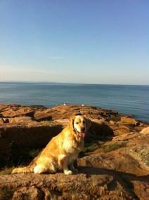 hund vid havet