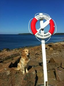 en hund vid havet