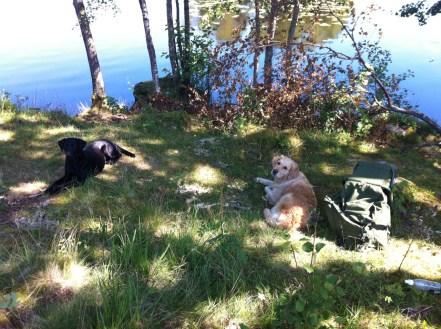 två hundar vilar i gräset